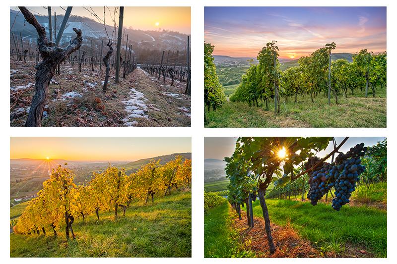 Fotogalerie über Wein