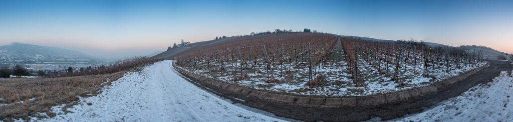 Morgendämmmerung im Winter Weinberg Panorama