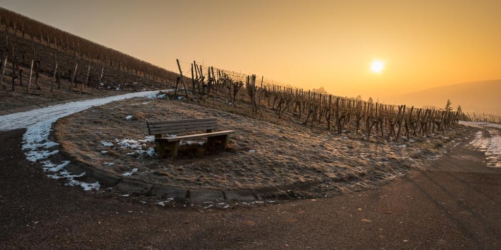 Bank im Weinberg mit Sonne am Morgen