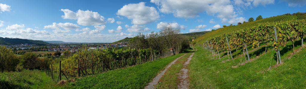 Panorama Weinberg mit Feldweg