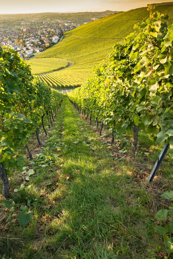 Weinort Weinstadt Beutelsbach