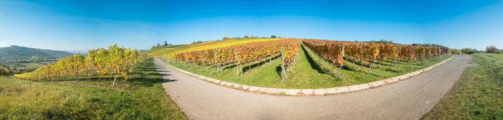 Panorama Weinberg im Herbstlaub
