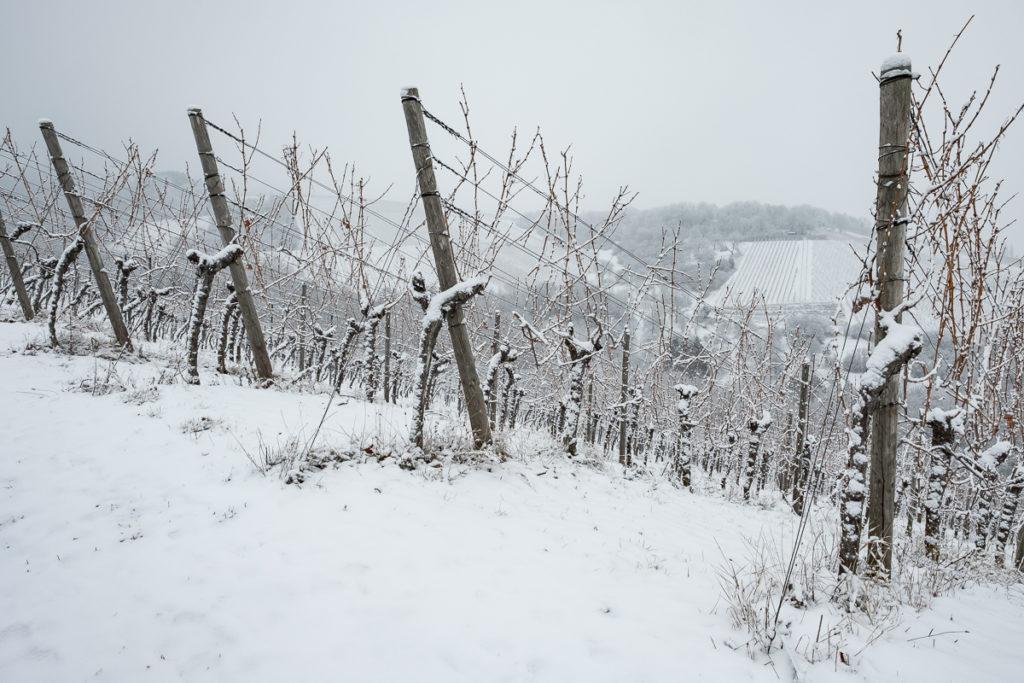 Weinberg mit Winter mit Schnee