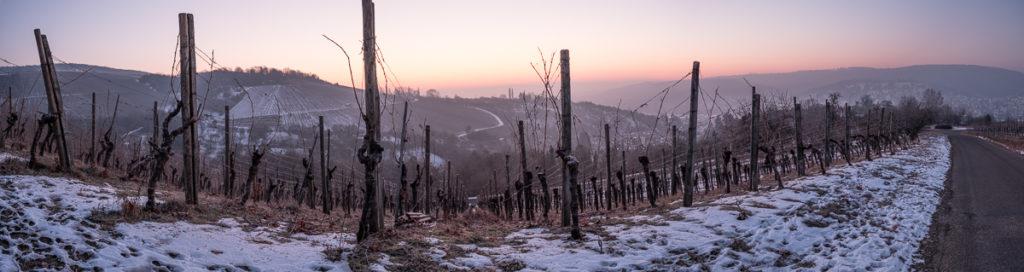 Weinberg in der blauen Stunde im Winter mit Schnee