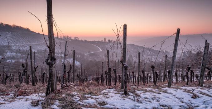 Morgendämmerung im Winter im Weinberg