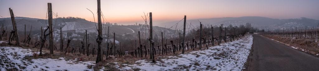 Blaue Stunde im Weinberg im Winter