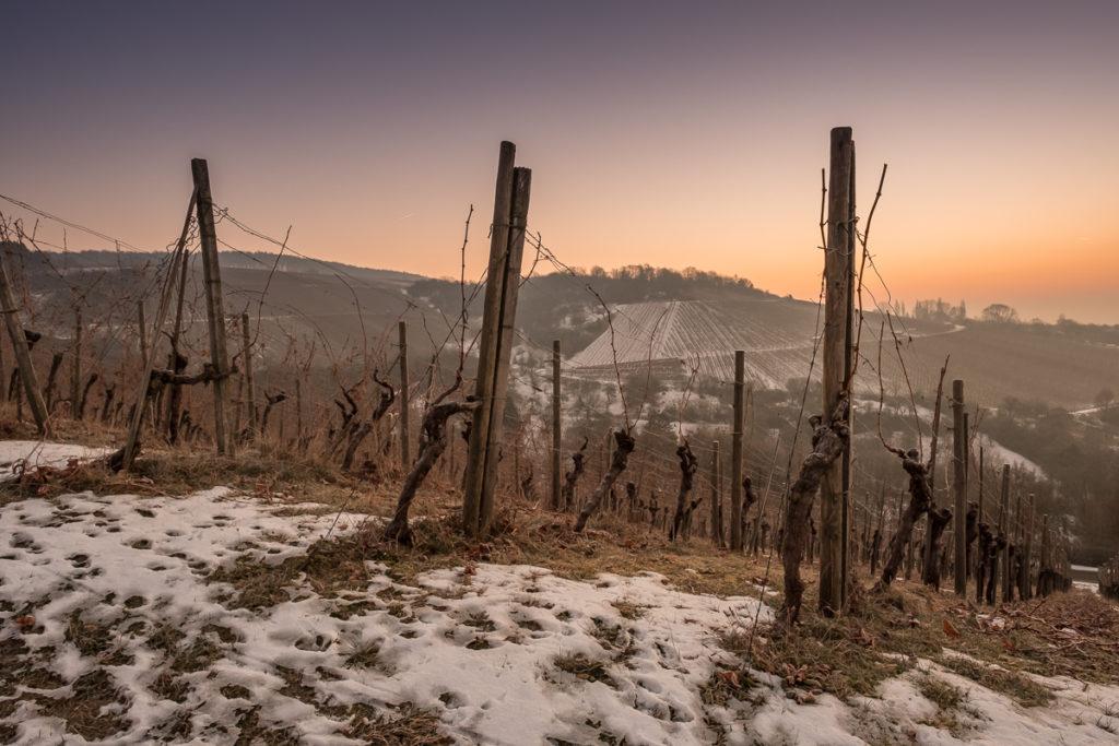Dämmerung im winterlichen Weinberg