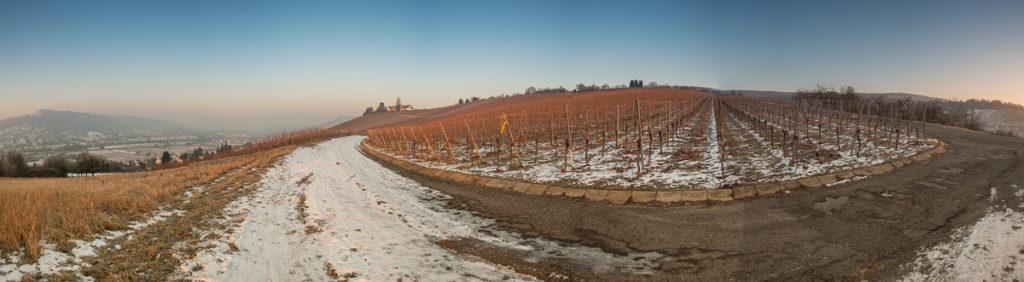 Weinberg Panorama im Winter mit Schnee