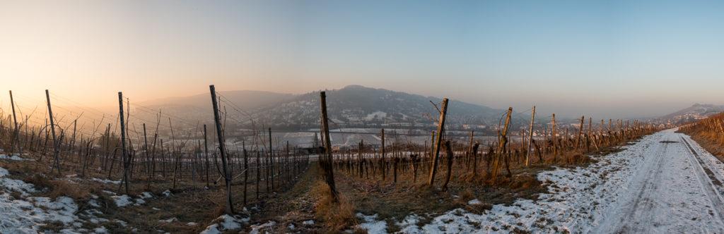 Sonnenaufgang im Winter im Weinberg Panorama