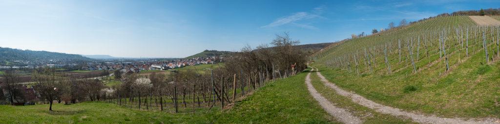 Weinberg und Obstwiesen im Frühling als Panorma