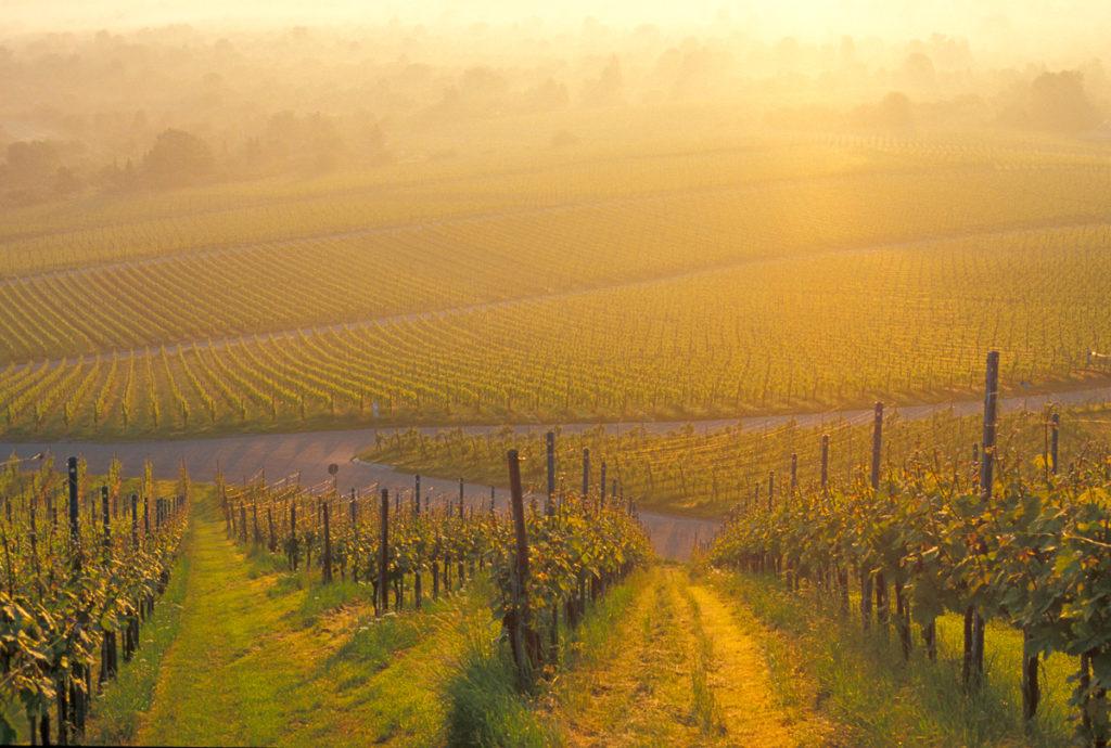 Fellbach bei Sonnenaufgang