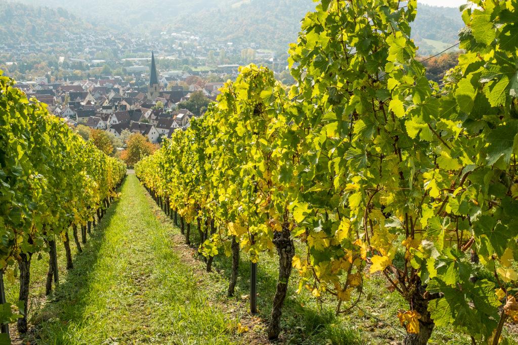 Weinort Remshalden-Geradstetten