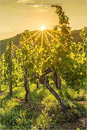 Notizbuch mit Sonnenaufgang im Weinberg