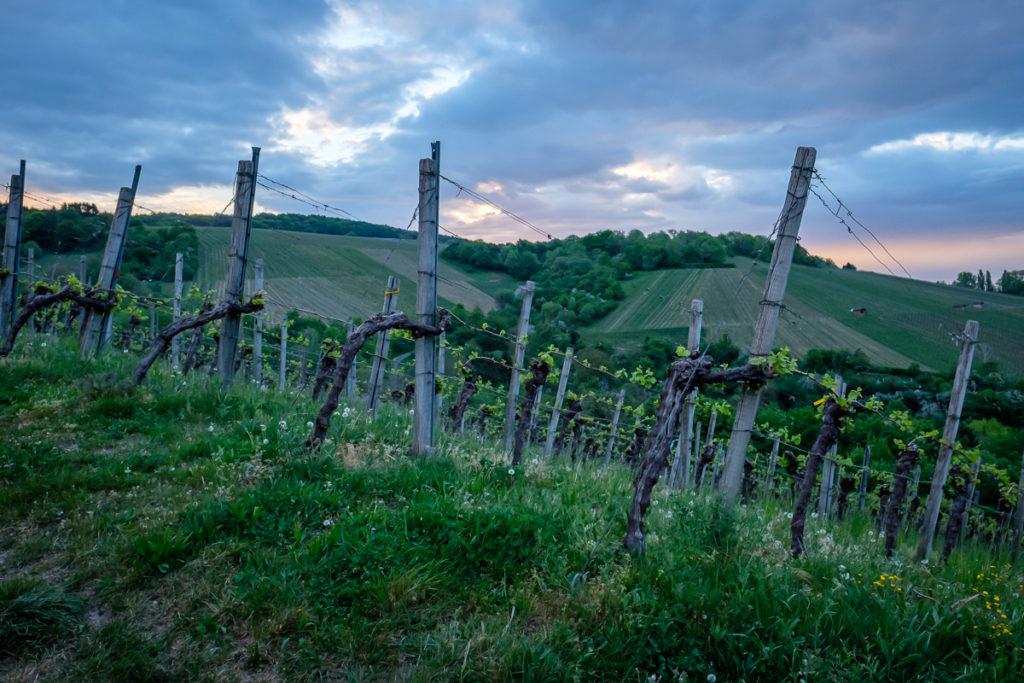 Wein im Remstal - Frühjahr