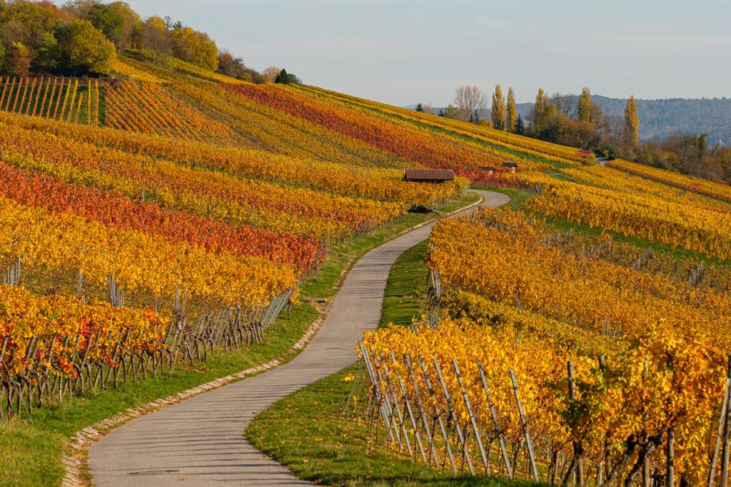 Wein im Remstal - Herbst