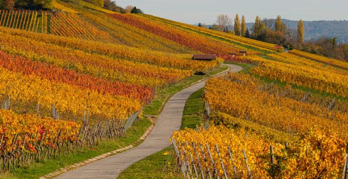 Wein aus dem Remstal