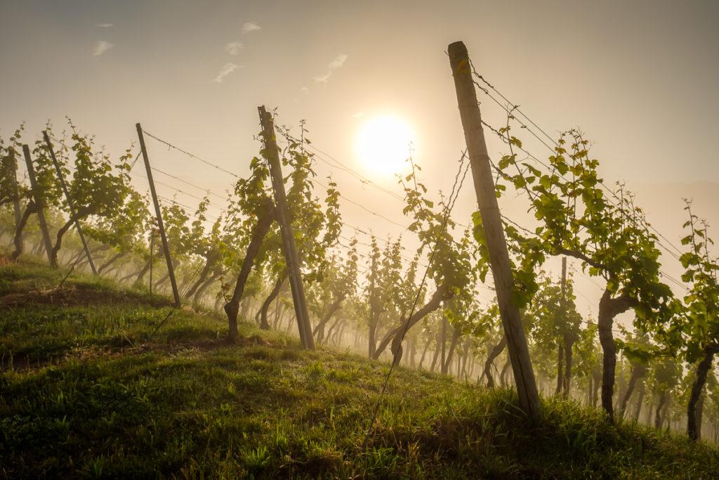 Wein im Remstal - Nebel