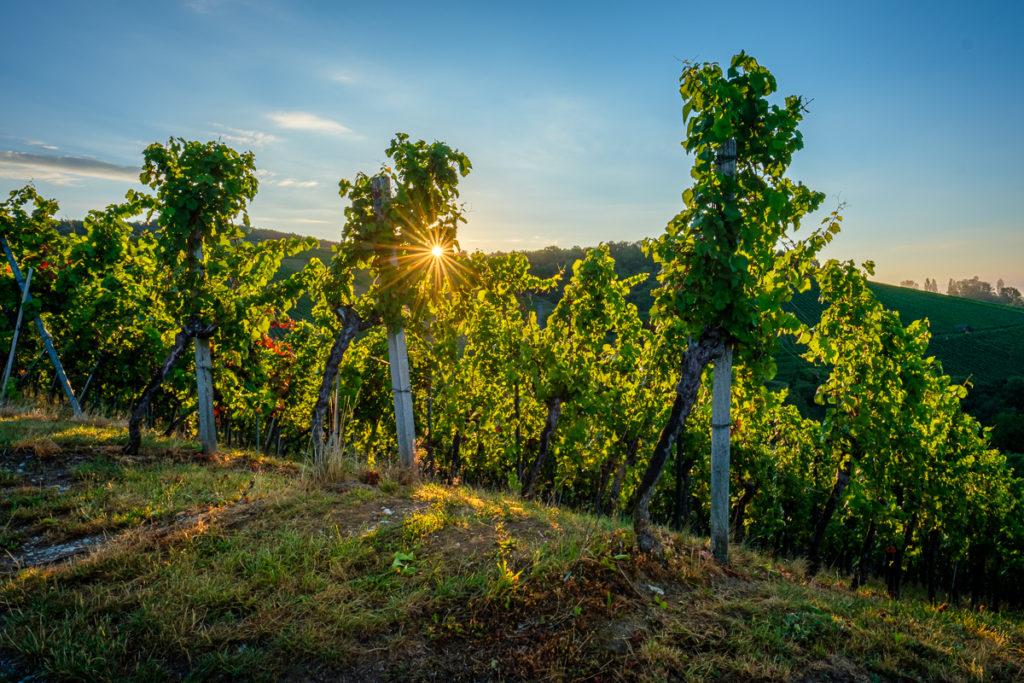 Wein im Remstal - Sommer
