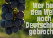 Wer hat den Wein nach Deutschland gebracht?